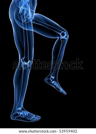 leg x-ray illustration - stock photo