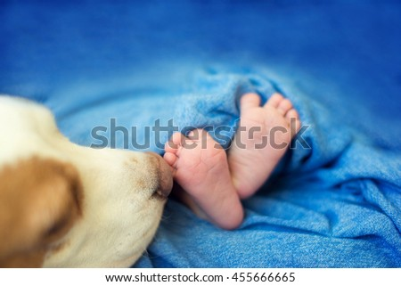 legs and newborn dog muzzle, Dog sniffs newborn - stock photo