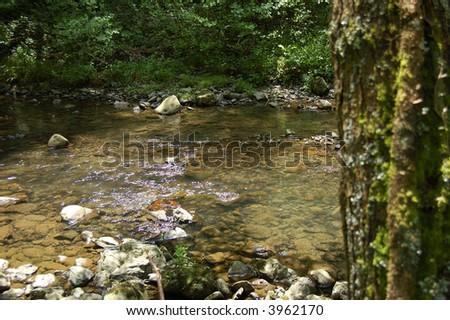 Leitza river and tree with vegetation. Leitzaran Valley, Navarra, Spain - stock photo