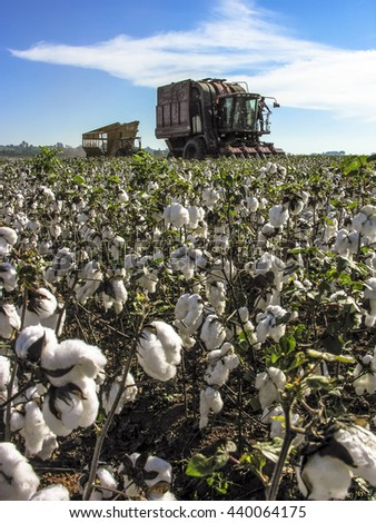 Leme, Sao Paulo, Brazil, May 10, 2005. A cotton field is being picked during the fall harvest