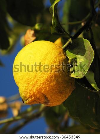 Lemon against blue Italian sky - stock photo