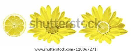 Lemon Flower isolated on white - stock photo