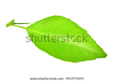 Lemon leaf with thorn isolated on white