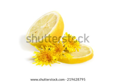Lemon with yellow dandelion isolated on white background - stock photo