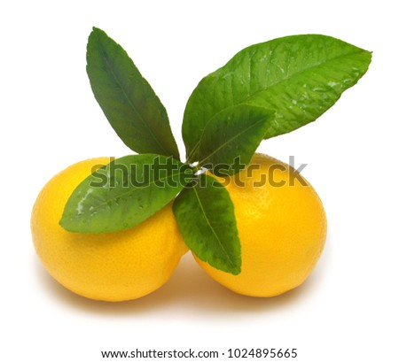 Lemons beautiful whole with leaves isolated on white background. Vitamin C. Tropical useful fruit. Flat lay, top view