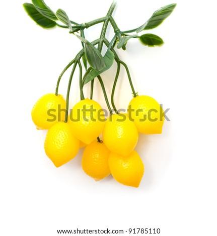 lemons on a tree on a white background - stock photo