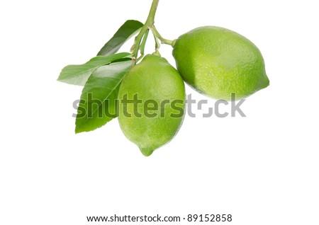 Lemons on white background - stock photo