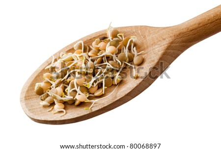 Lentil sprouts on a wooden spoon - stock photo