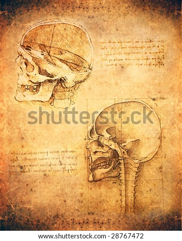 leonardo da vinci antomy skull - stock photo