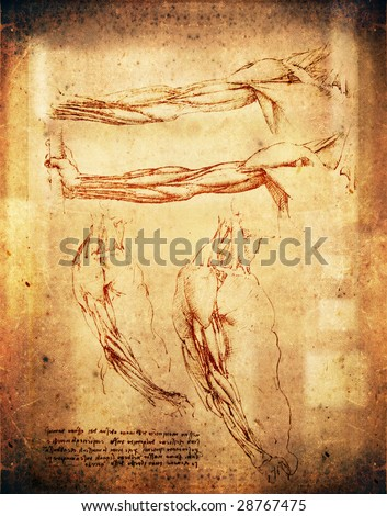 leonardo da vinci style arms illustration - stock photo