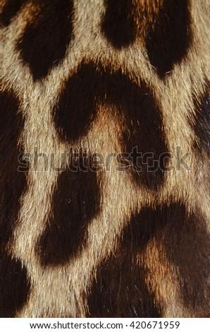 leopard fur - stock photo