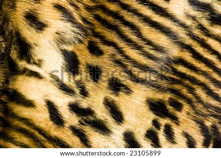 leopard fur texture - stock photo