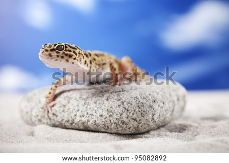 Leopard Gecko lizard on sand - stock photo