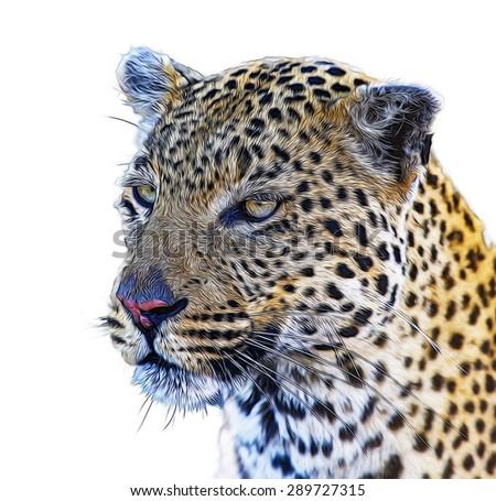 Leopard illustration - stock photo