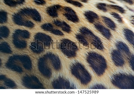 leopard in the summer on the nature