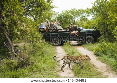 Leopard (Panthera pardus) crossing road with tourists in jeep in background - stock photo