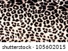 Leopard Pattern - stock photo