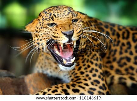 Top 2.384.878 hình ảnh về động vật hoang dã đẹp nhất năm 2017