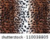 Leopard Print - stock photo