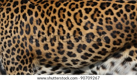 leopard skin - stock photo