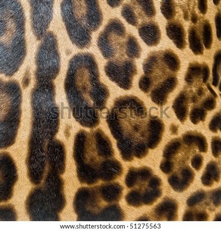 Leopard skin background - stock photo