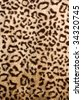 Leopard skin pattern - sensual silky soft blanket or clothing material with animal design - stock photo