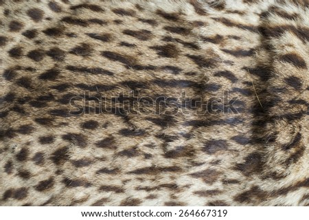 Leopard skin texture and background - stock photo