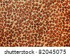 Leopard spots - stock photo
