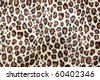 Leopard spots background - stock photo