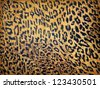 Leopard texture on paper - stock photo