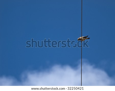 Lesser or Common Kestrel perched on high tension cable in search of prey