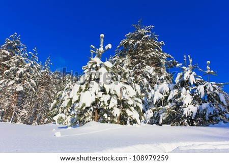 Let it snow! - stock photo
