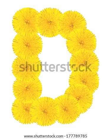 Letter D made from dandelion flowers isolated on white background - stock photo