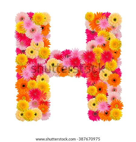 Letter H alphabet with gerbera  isolated on white background   - stock photo