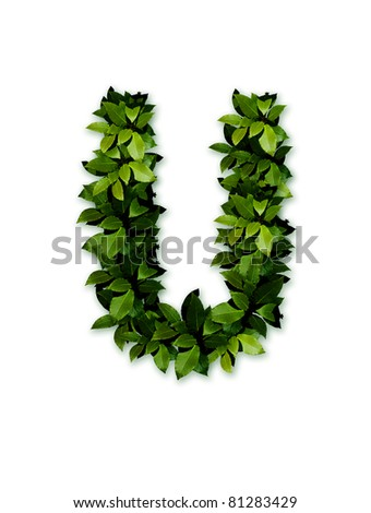 letter leaves u - stock photo