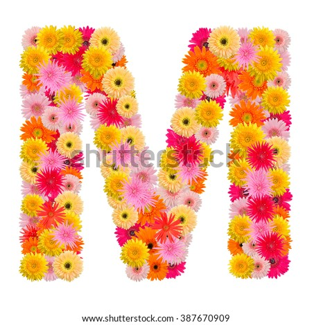 Letter M alphabet with gerbera  isolated on white background   - stock photo