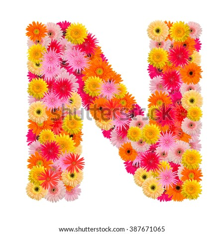Letter N alphabet with gerbera  isolated on white background   - stock photo