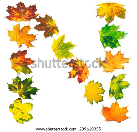 Letter N composed of autumn maple leafs. Isolated on white background.