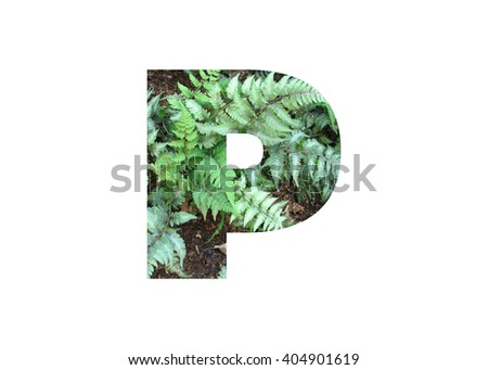 Letter P double exposure with green grass leaf isolated. Collage silhouette numbers combined with nature. Letters of alphabet. Font made with leaves, floral alphabet letters set, Eco Alphabet.  - stock photo