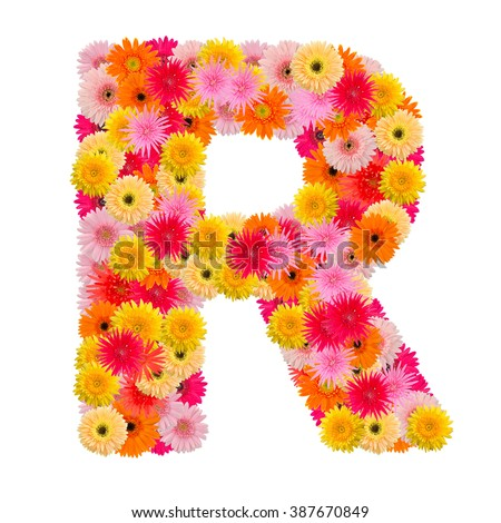 Letter R alphabet with gerbera  isolated on white background   - stock photo
