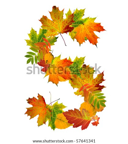 Letter S made of autumn colored leaves close up  isolated on white background - stock photo