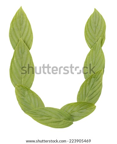 Letter U. Alphabet made of leaves isolated on white. - stock photo