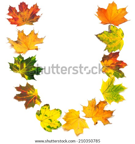 Letter U composed of autumn maple leafs. Isolated on white background.