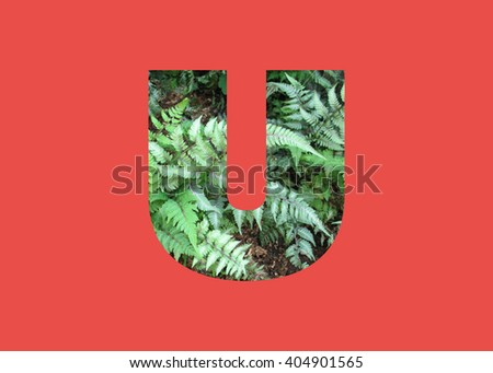 Letter U double exposure with green grass leaf isolated. Collage silhouette numbers combined with nature. Letters of alphabet. Font made with leaves, floral alphabet letters set, Eco Alphabet.  - stock photo