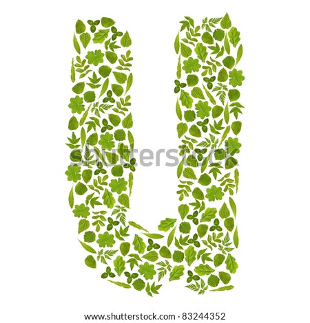 Letter U from green leafs - stock photo
