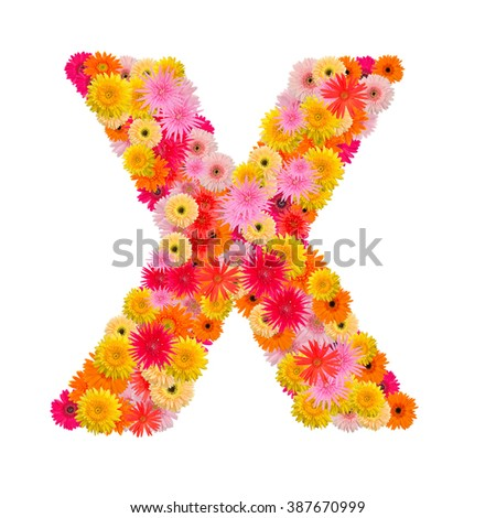 Letter X alphabet with gerbera  isolated on white background   - stock photo