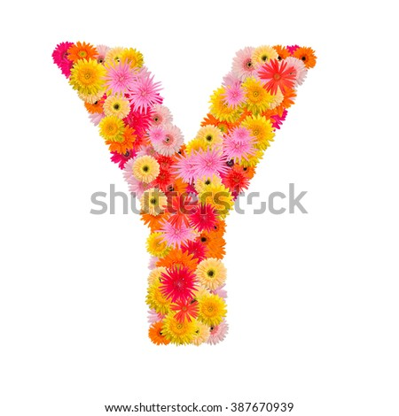 Letter Y alphabet with gerbera  isolated on white background   - stock photo