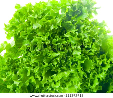 lettuce - stock photo