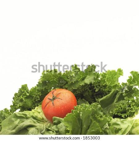 Lettuce and tomato - stock photo