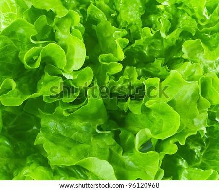 lettuce background - stock photo